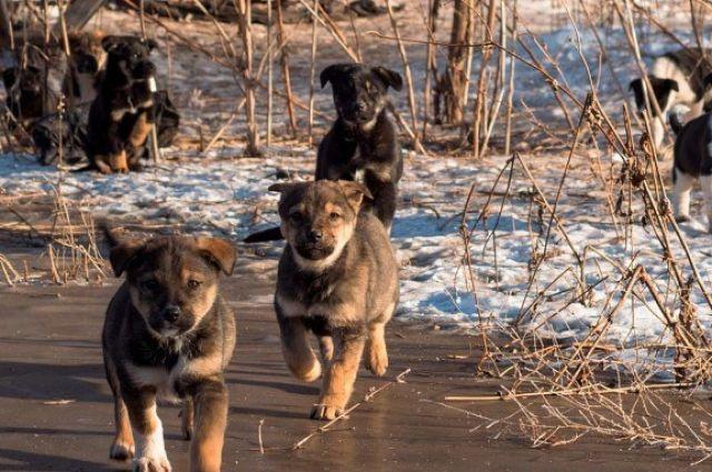 Оренбурженке отказали в возбуждении дела после убийства собаки и щенков.