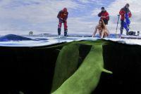 Температура воды в Белом море была минус 2 градуса.