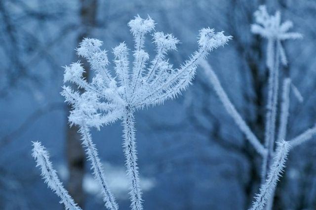 ВУкраине вближайшие сутки будет сухо иумеренно прохладно