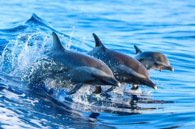 Более 150 дельфинов выбросились на берег Австралии - Real estate