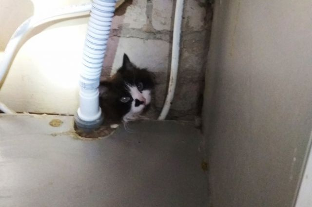 Кот застрял между пластиковых труб в кухонном гарнитуре под раковиной.