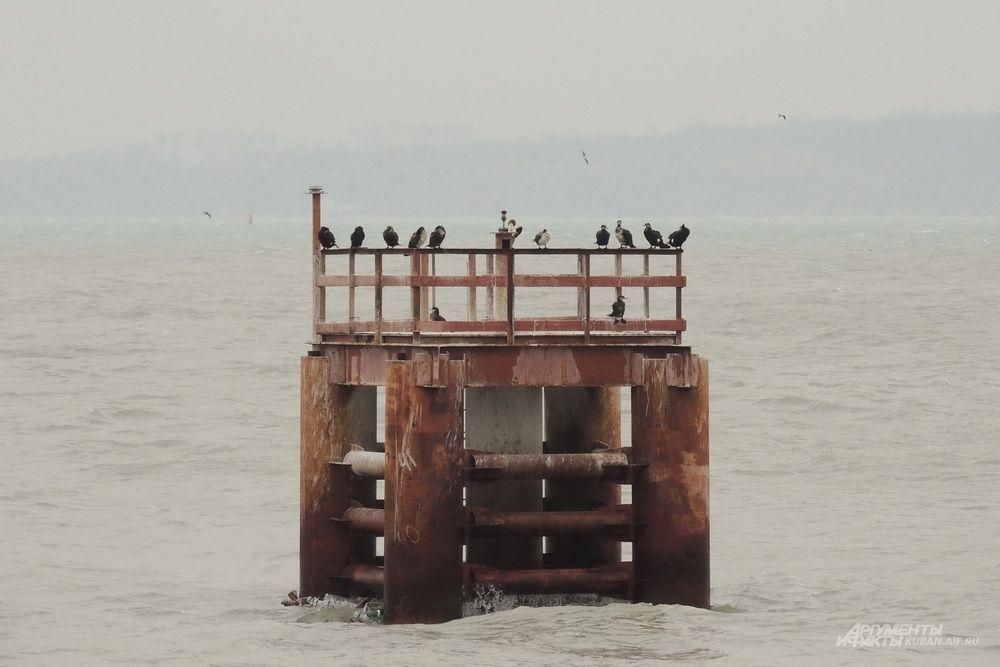 Птицы на вспомогательном сооружении возле моста.