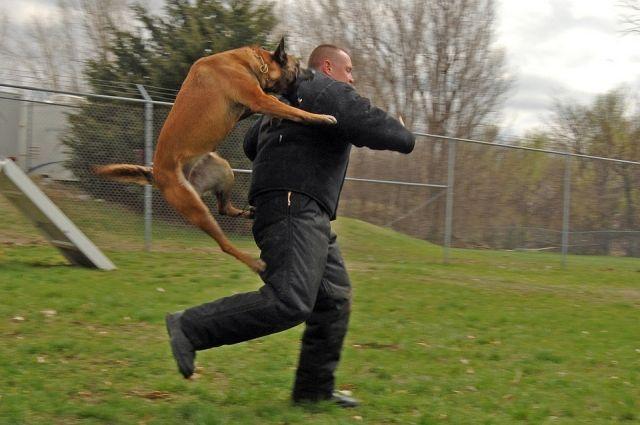 Поворачиваться спиной к агрессивной собаке ни в коем случае нельзя.