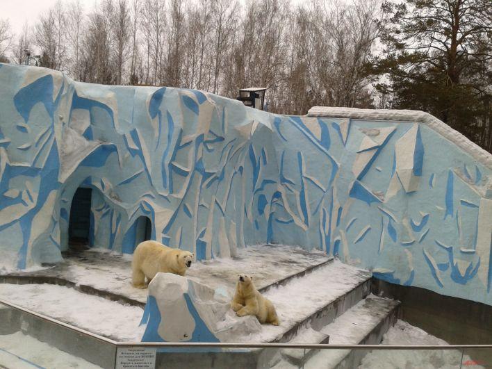 Белая медведица тоже проводит время вместе с сыном Ростиком, хоть он уже и взрослый мужчина.