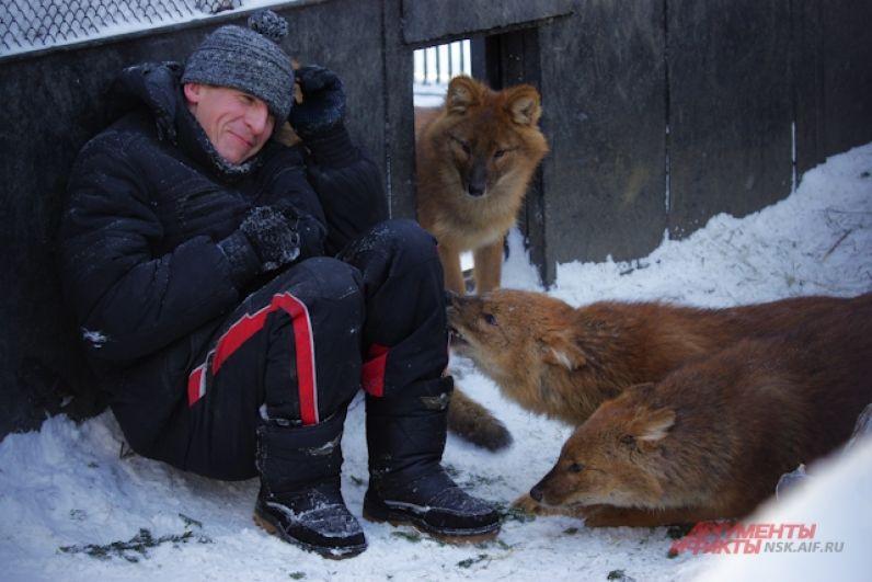 Кстати, история у этой дружной компании - пятерых красных волков, необычная. Волчата родились в 2016 году и из-за прорблем с молоком их не смогла выкормить родная мать. Приемной стала кошка Муська. Возможно поэтому волчата выросли такими дружелюбными.