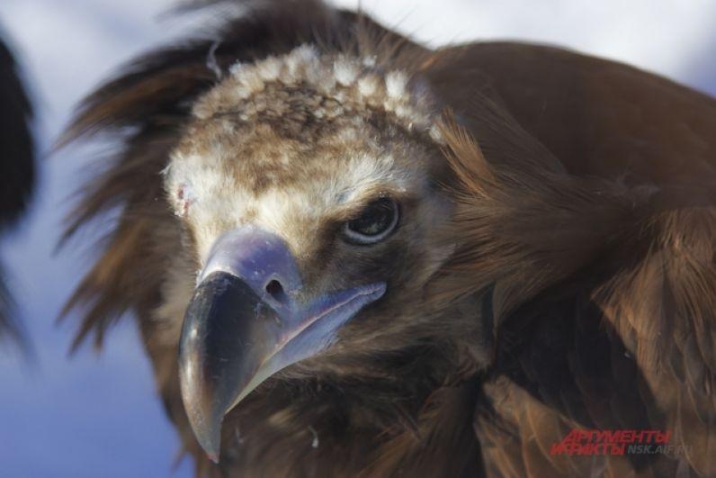 Однако первыми весну в зоопарке, как уверяют сотрудники, почувствовали птицы.