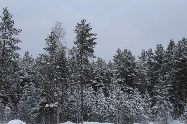 Глубина снежных сугробов достигала 1,5 метров.