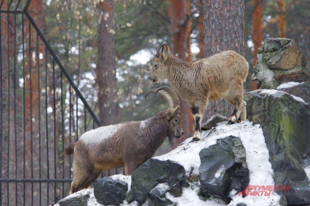 Время от времени посетителей пугают громкие крики - в брачный период некоторые звери - особенно олени, рыси и некоторые копытные издают особые громкие звуки в поисках второй половины.