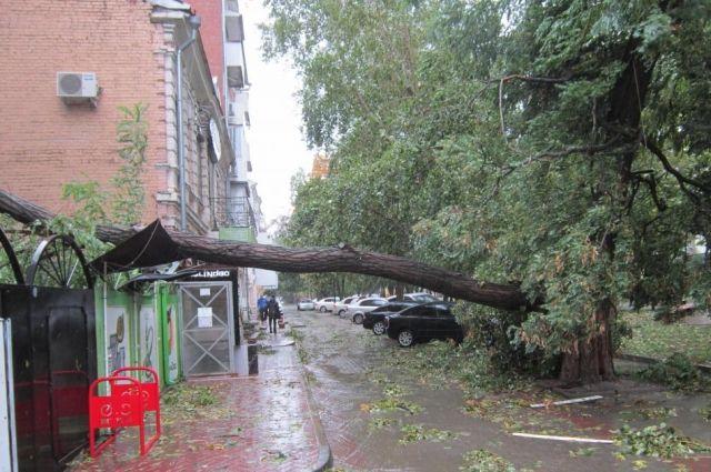Не всегда упавшее дерево имеет признаки аварийности, считают специалисты.