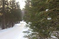В лесу должны появиться спортивные и игровые площадки.