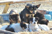 В месяц отлавливают в среднем 73 бездомные собаки.