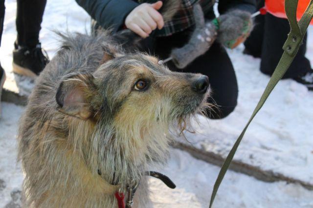 Гражданин Рязани палкой досмерти забил беременную собаку прямо вовремя родов