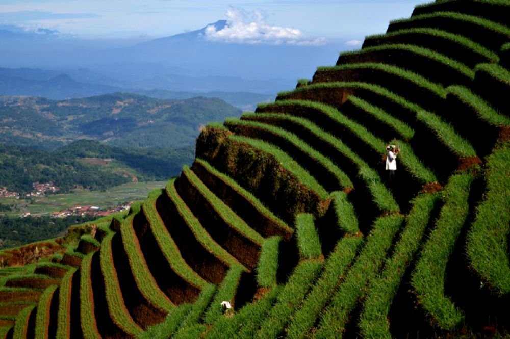 Фермер на склоне горы, Западная Ява, Индонезия.