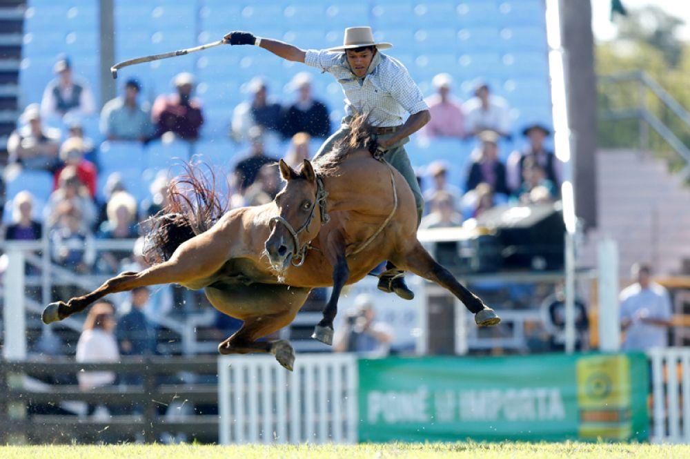Гаучо на лошади во время родео-фестиваля под названием Креольская неделя в Монтевидео, Уругвай.