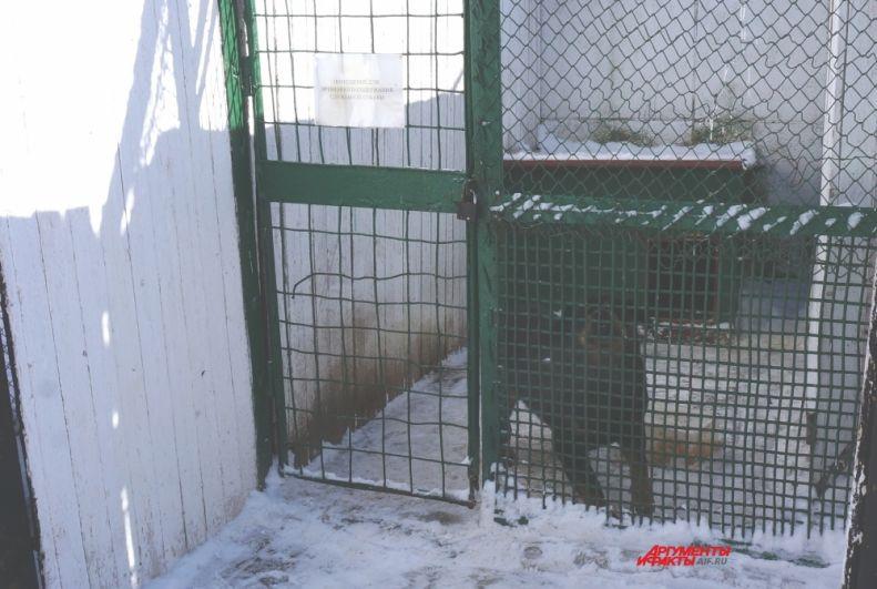 Собак для работы с заключёнными не используют, служебные псы охраняют территорию учреждения.