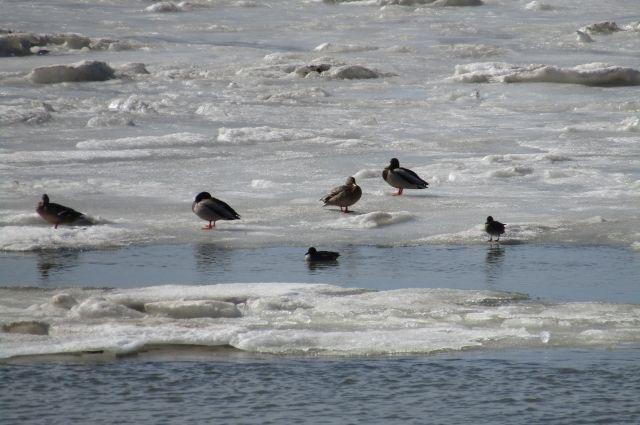 С каждым днем выходить на лед становится всё опасней.