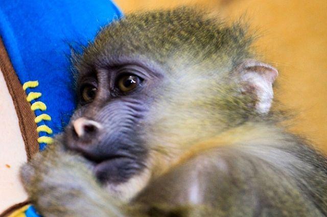 В зоогелерее содержится множество экзотических животных.
