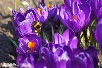 Настоящая весна не за горами!