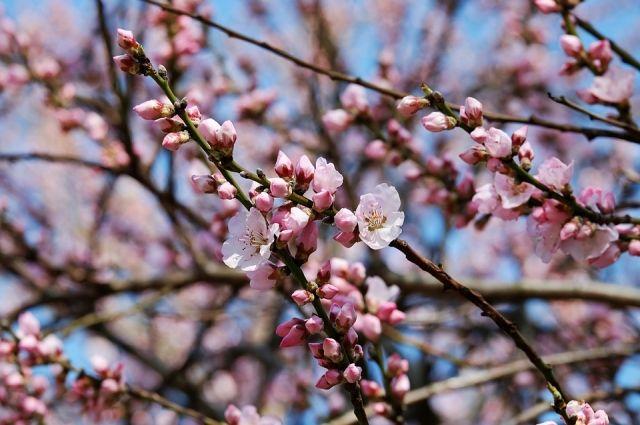 В четверг в Кемеровскую область придет настоящая весна.