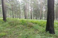 У Омского леса много бед.