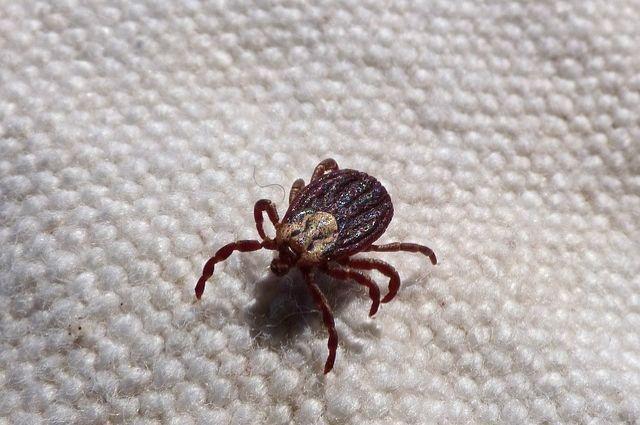 Клещи проснулись: Роспотребнадзор заявил о начале активности насекомых