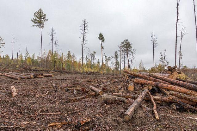 В Тюменской области на нефтяном месторождении рабочие повредили лес