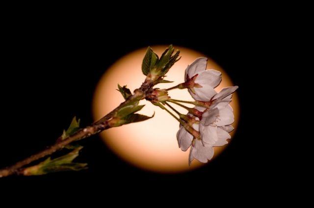 Влиянием Луны на растения можно смело пренебречь.