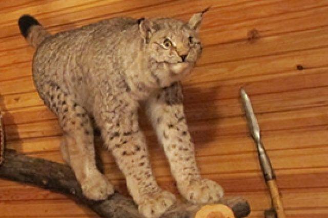 На сайте продавались чучела редких животных.
