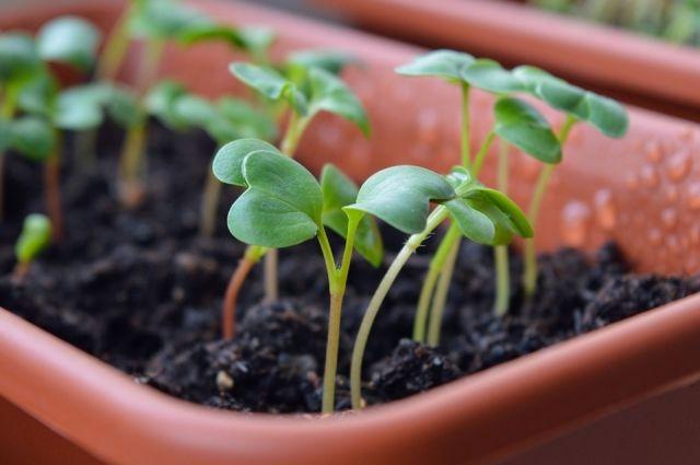 Апрель - самое время заняться рассадой.