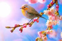 6 апреля: праздники, именины, важные события и народные традиции