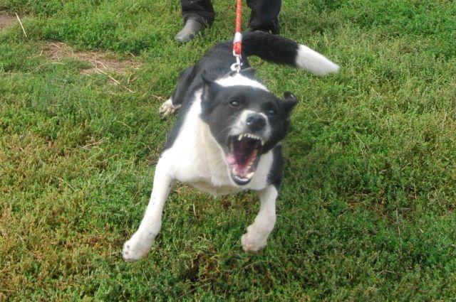 В Раде планируют увеличить штрафы для «безответственных» владельцев собак