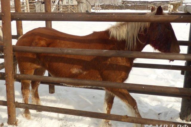 Лошадь вернулась домой сама.