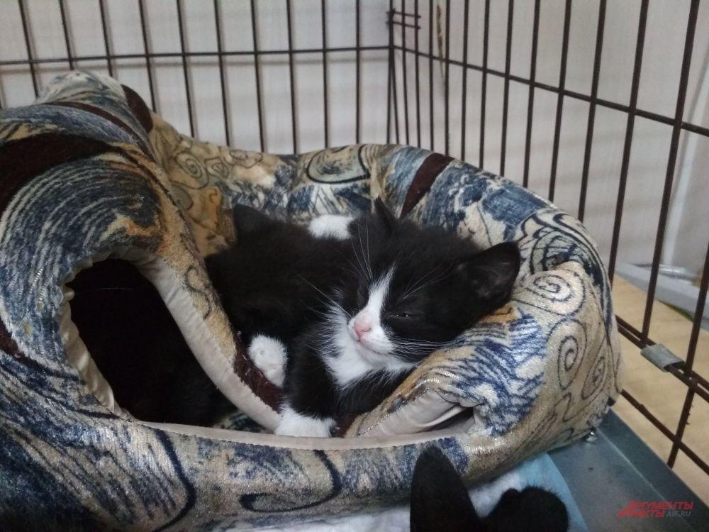 Не так давно у одной из кошек появились котята. Теперь всё семейство живет в новом помещении «Матроскина»