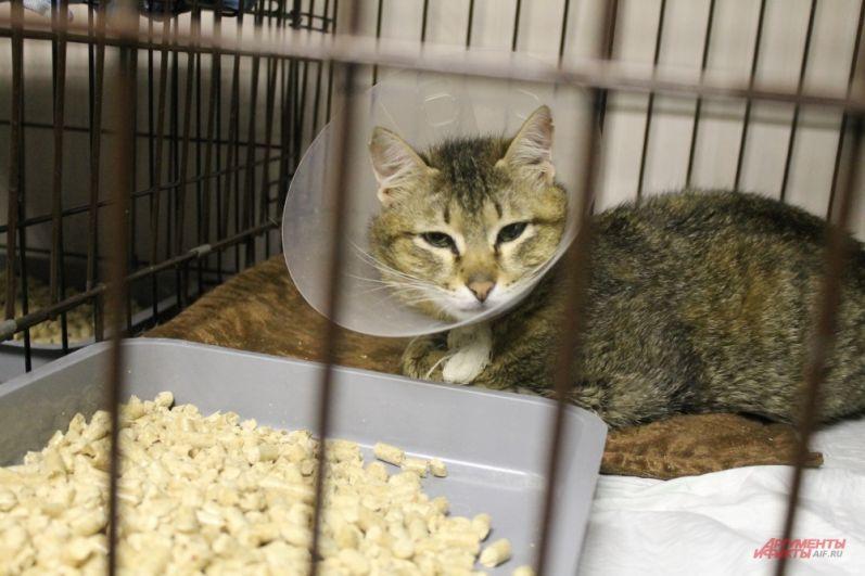 Некоторые коты прошли лечение