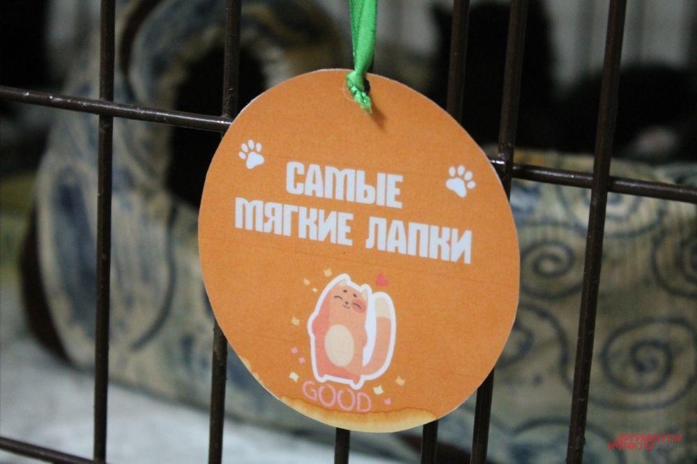 У многих кошек на клетках висят «медальки» за их достижения