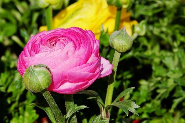 ВОмске посадят цветы на2,6 млн. руб.