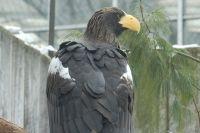 Имена для пары орланов выбраны.