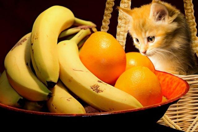 Нередко питомцы удивляют хозяев неожиданными предпочтениями в еде.