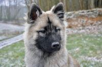 Актуальная фотография животного, размещенная в соцсетях и на подъезде, облегчит поиски.