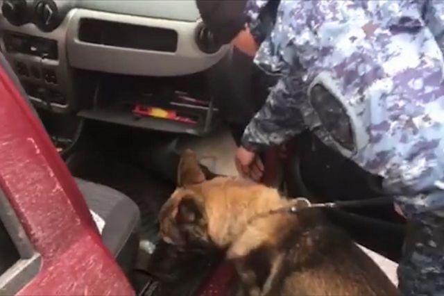 К досмотру машины привлекли кинолога с собакой.