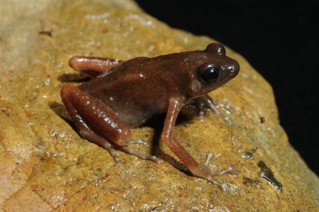Ученые нашли в пещерах Таиланда новый вид лягушек - Real estate