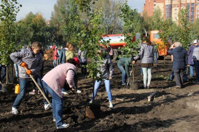 Посадят 42 тысячи деревьев