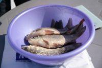 Через необеззараженную рыбную продукцию существует риск заражения более 20 видами паразитов.