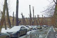 После подобной обрезки дерево уже не является защитой от смога и пыли.