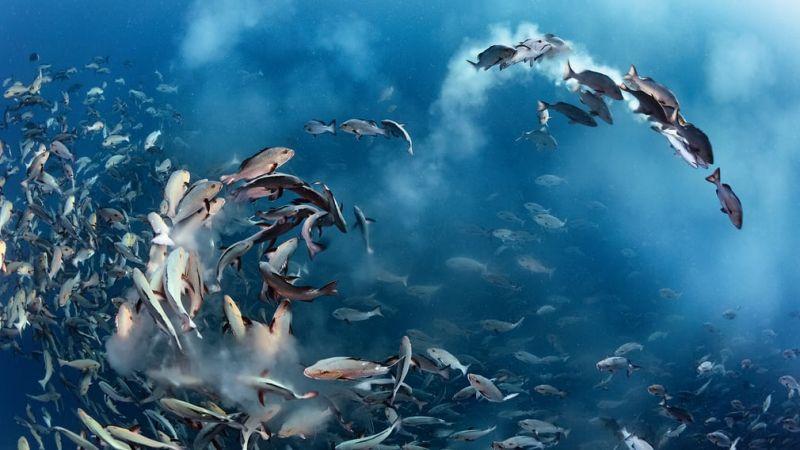Тут целые стаи рыб: аж глаза разбегаются от их огромного количества.