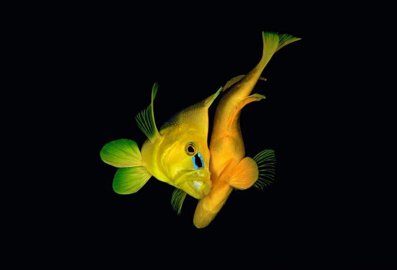 Необычайной красоты рыбы живут в подводных глубинах.