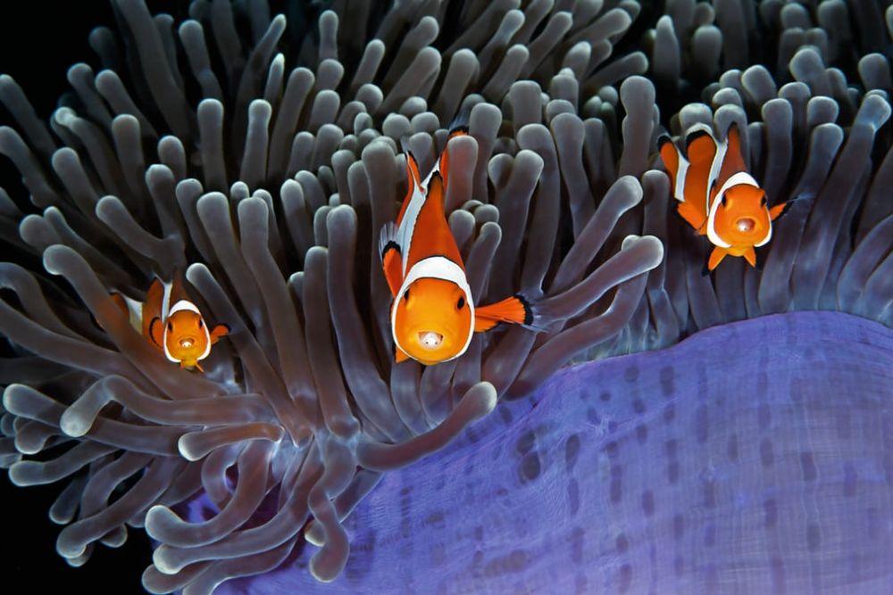 А эти рыбки, как герои популярного мультфильма. Кажется, что они даже разговаривают.