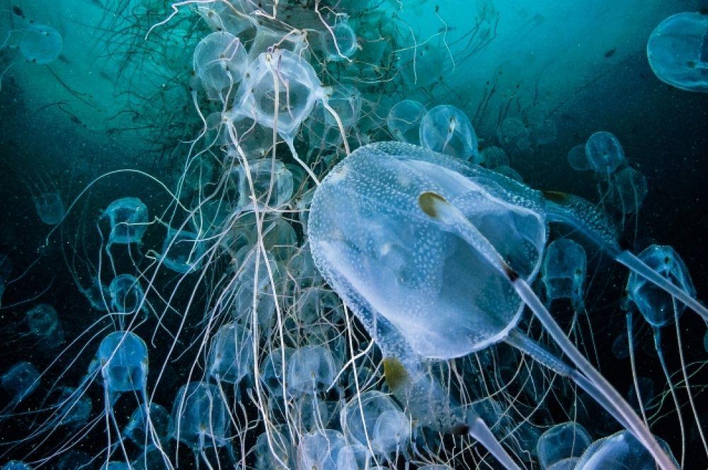 А медузы как будто сотканы из кружева…