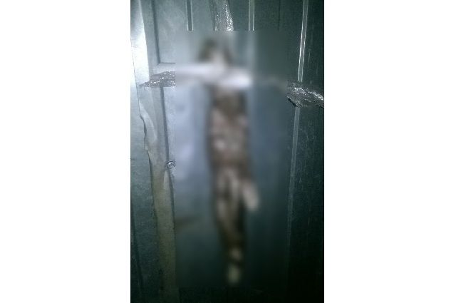 ВРязани неизвестные убили кошку
