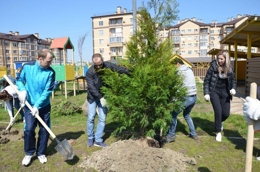 Около 100 крупномерных деревьев высажены в День древонасаждения на территории новых детсадов города.